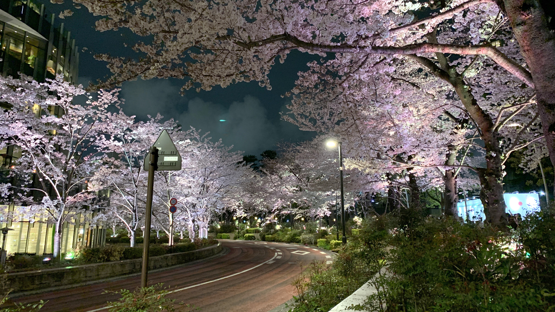 Tokyo Midtown Roppongi sakura