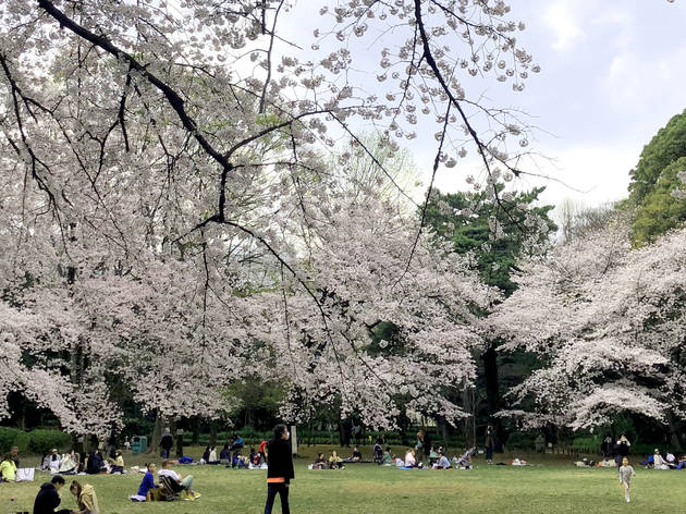 Cherry Blossom 2021 Report Are The Sakura At Full Bloom Yet Time Out Tokyo