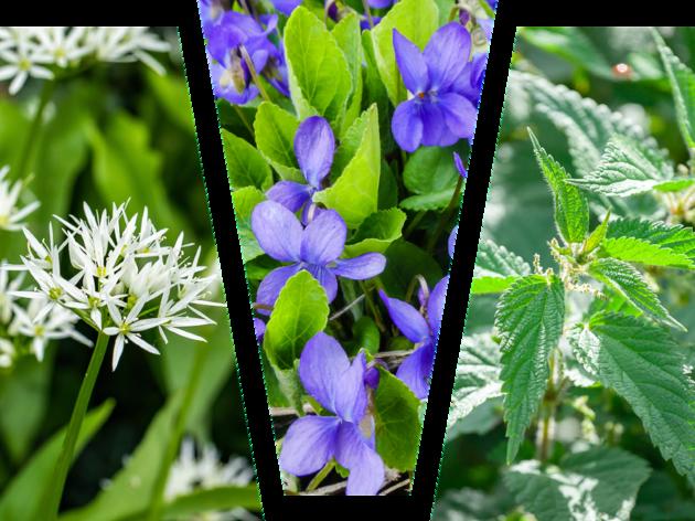 Foraged plants