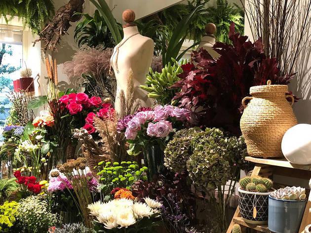 Flora Urban Jungle