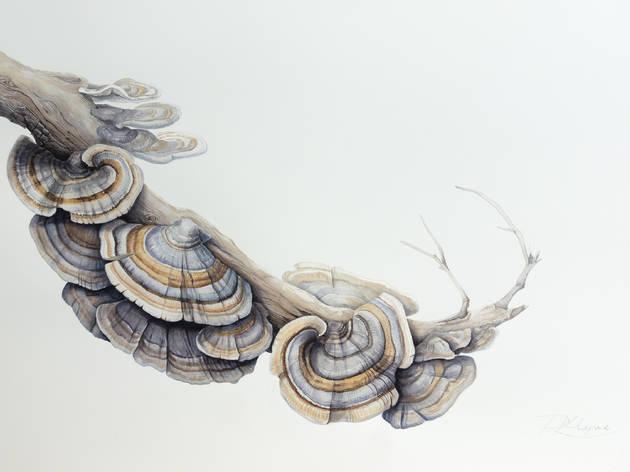 A botanical illustration of fungi