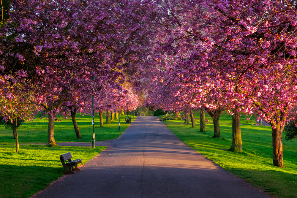 9 Brilliant Places To See Cherry Blossom In The Uk