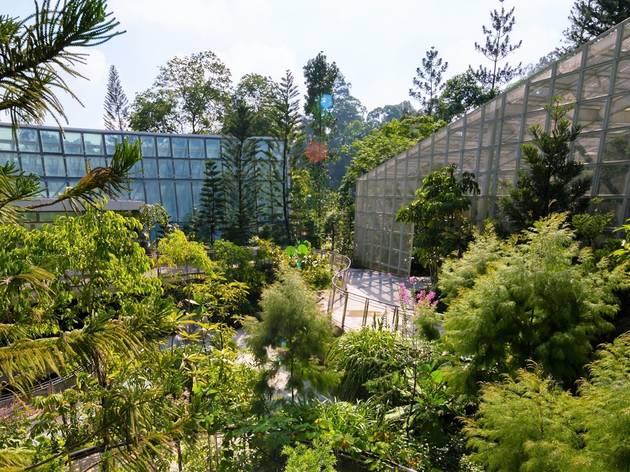 Enhanced National Orchid Garden