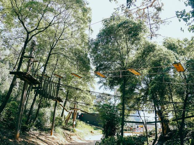 Parque, Jardim, Parque Palmela, Arborismo
