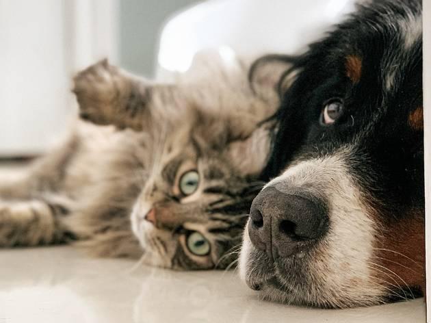 Laika, la app que amarán los pet lovers y sus mascotas