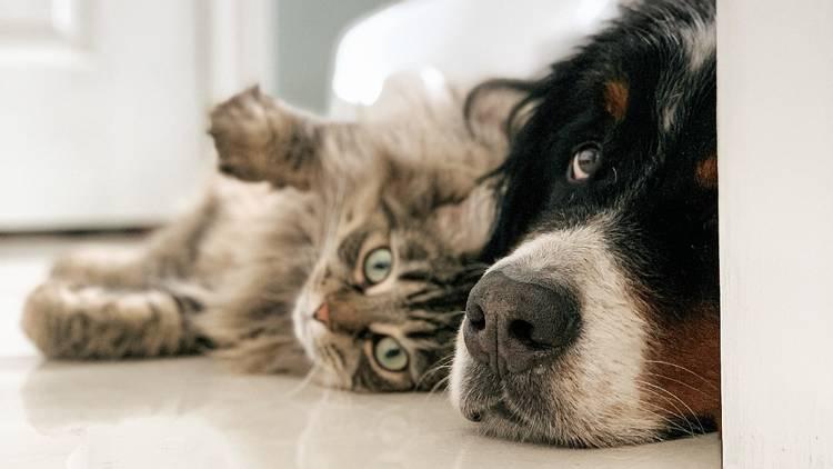 Foto de un perro y un gato acostados en el piso