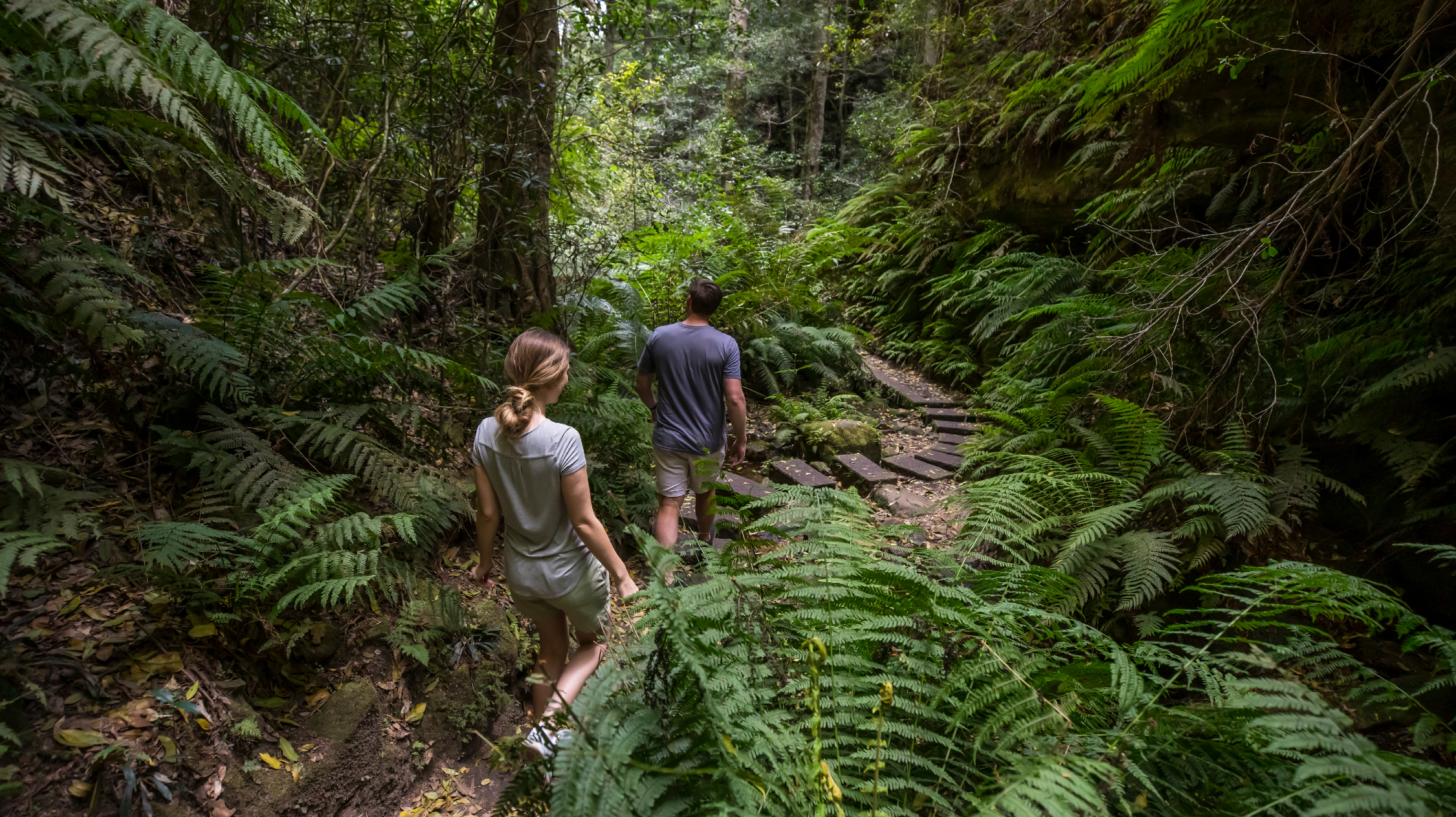 Two hikers trek through dense forrest on the Grand Canyon Walking Track in the Blue Mountains