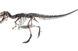 Sony presents DinoScience 恐竜科学博 ~ララミディア大陸の恐竜物語~