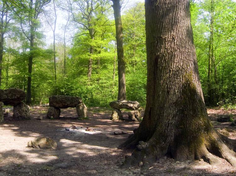 La forêt de Meudon