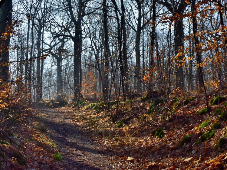 La forêt de Fausses-Reposes