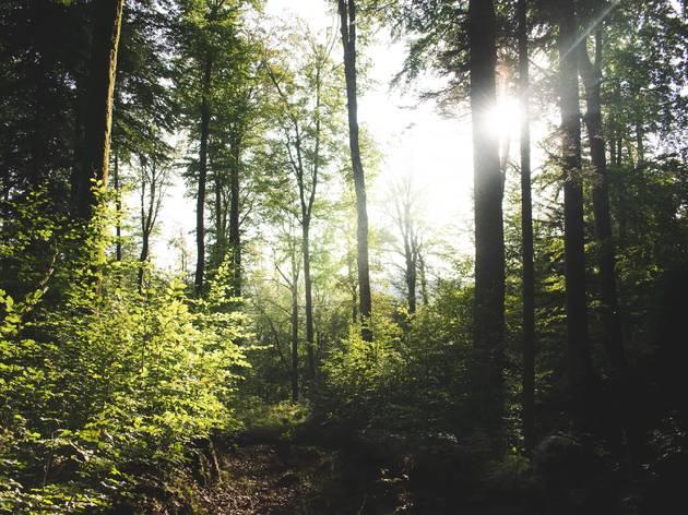 5 parcs et forêts où s'évader en pleine nature à moins de 10 km de Paris