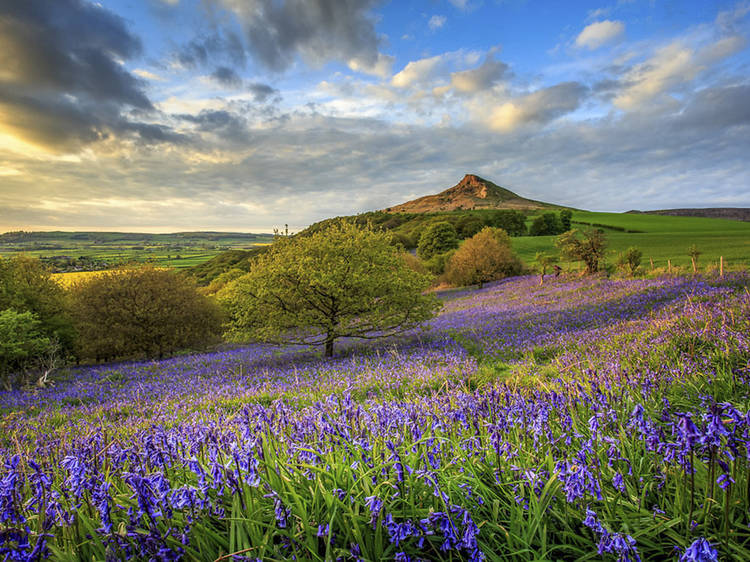 Beautiful places to see bluebells across the UK