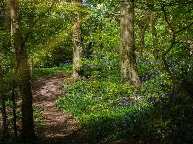 Fairy Glen Falls, Scotland