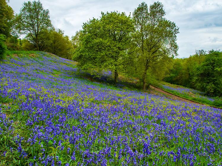 Clent Hills, Worcestershire
