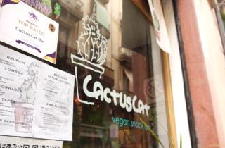 CactusCat Bar