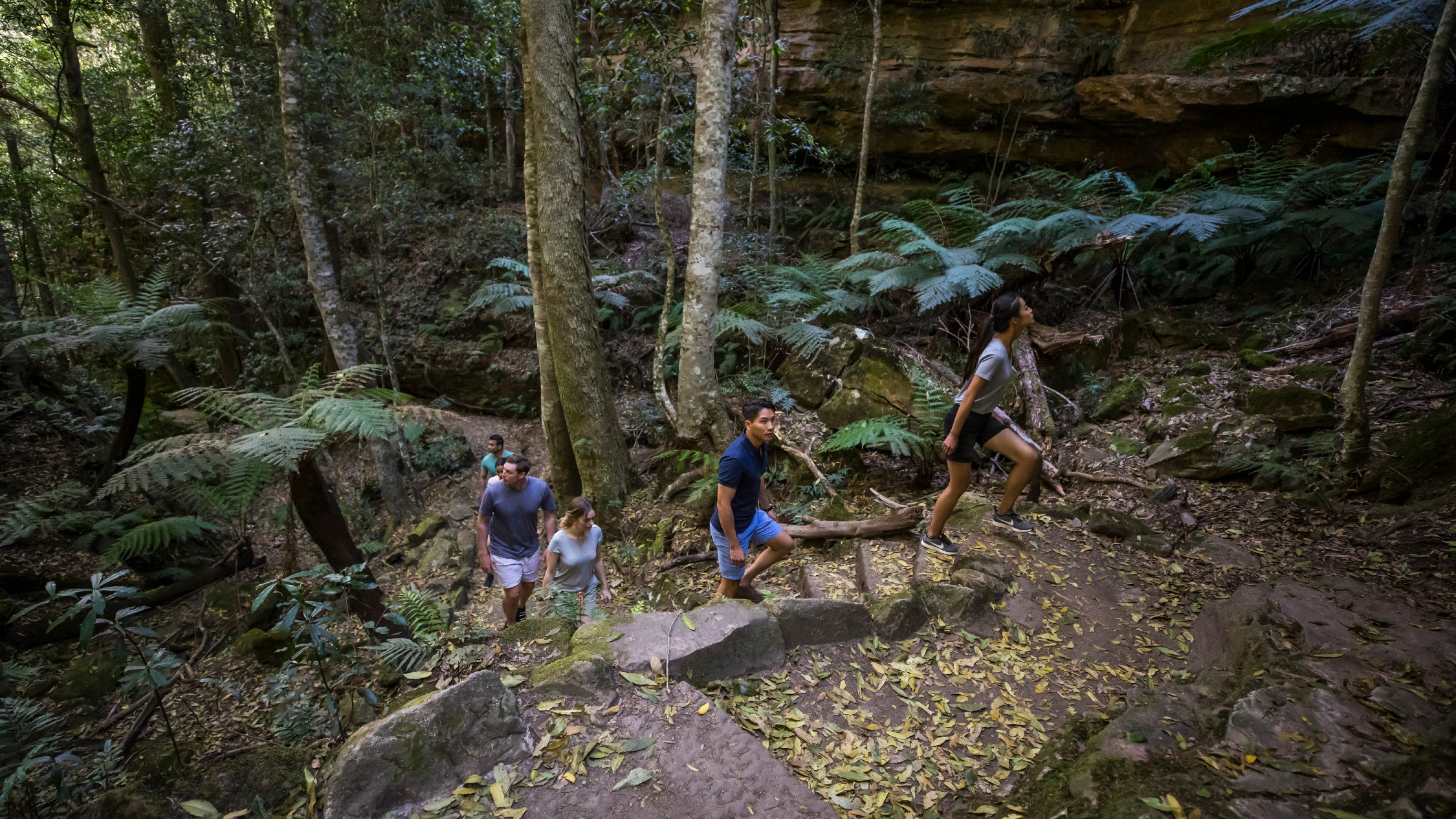 A group of hikers climb some rocky stairs on the Grand Canyon Walking Track in the Blue Mountains
