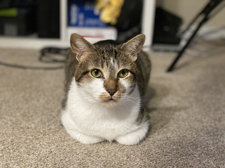 Vance cat PAWS Chicago