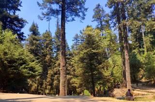 Exterior bosque de pinos durante el día