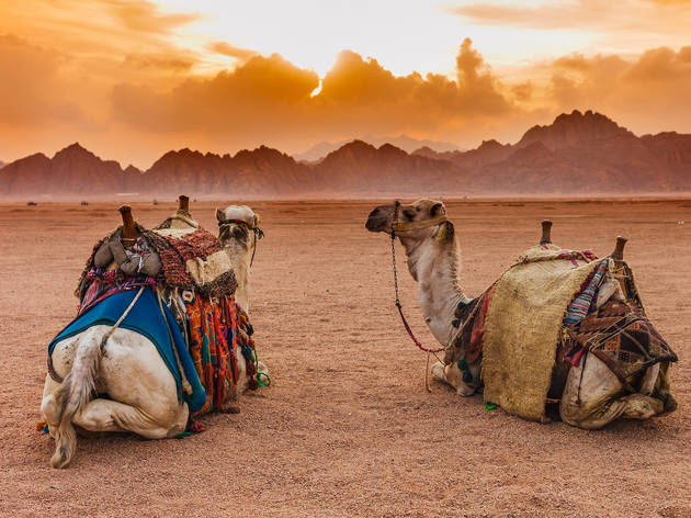 Sharm el Sheikh Egypt