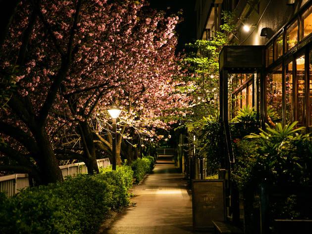 Nakameguro Night Walk