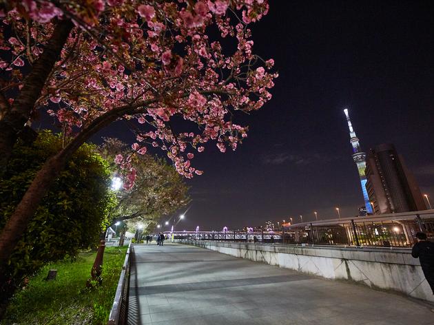 Tokyo Station night walk