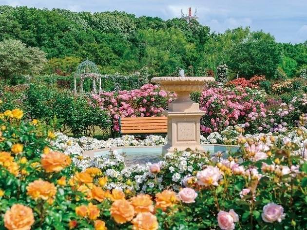 The Keisei Rose Garden in Chiba prefecture is hosting a spring flower festival