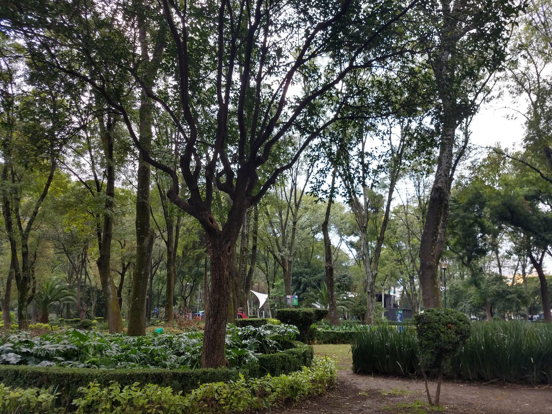 Árboles y arbustos en un parque