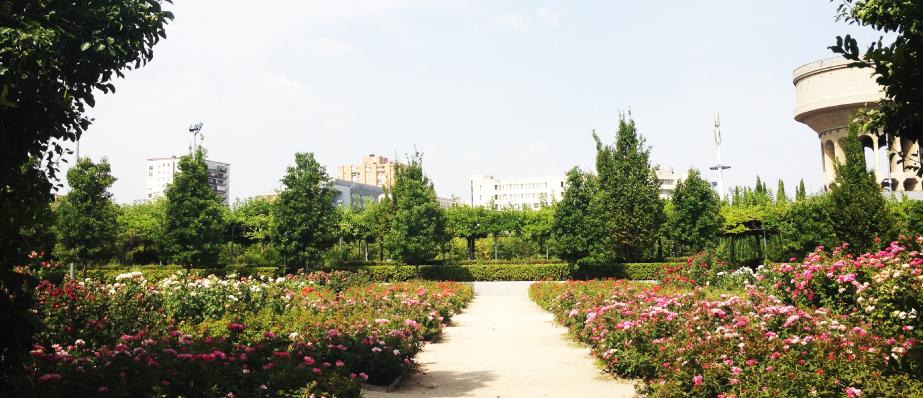 Rosaleda del Parque del Cuarto Depósito