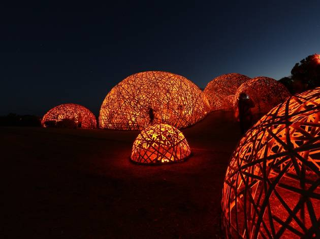 Glowing amber netted domes in a dark forest
