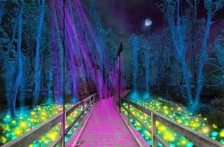 Moama Lights