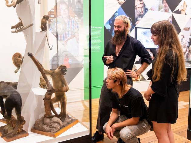 Three people look into a tall glass cabinet that contains taxidermy monkeys of different varieties.