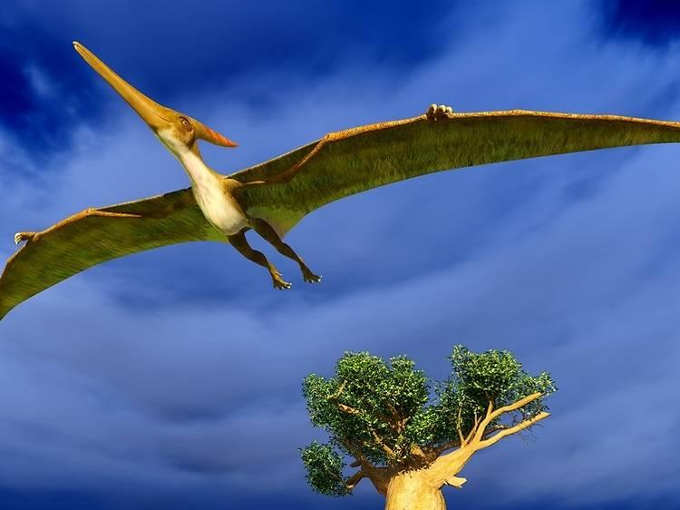 Un ave gigantesca sobrevuela Barcelona