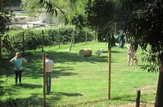 Parque Canino da Quinta Passal
