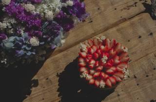 Fleur de Tarte