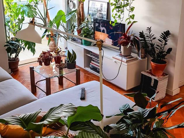 Plantas, @plantodependente, Diogo Gomes, Celso Teixeira
