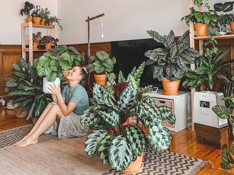 Três contas de Instagram sobre plantas que deve seguir