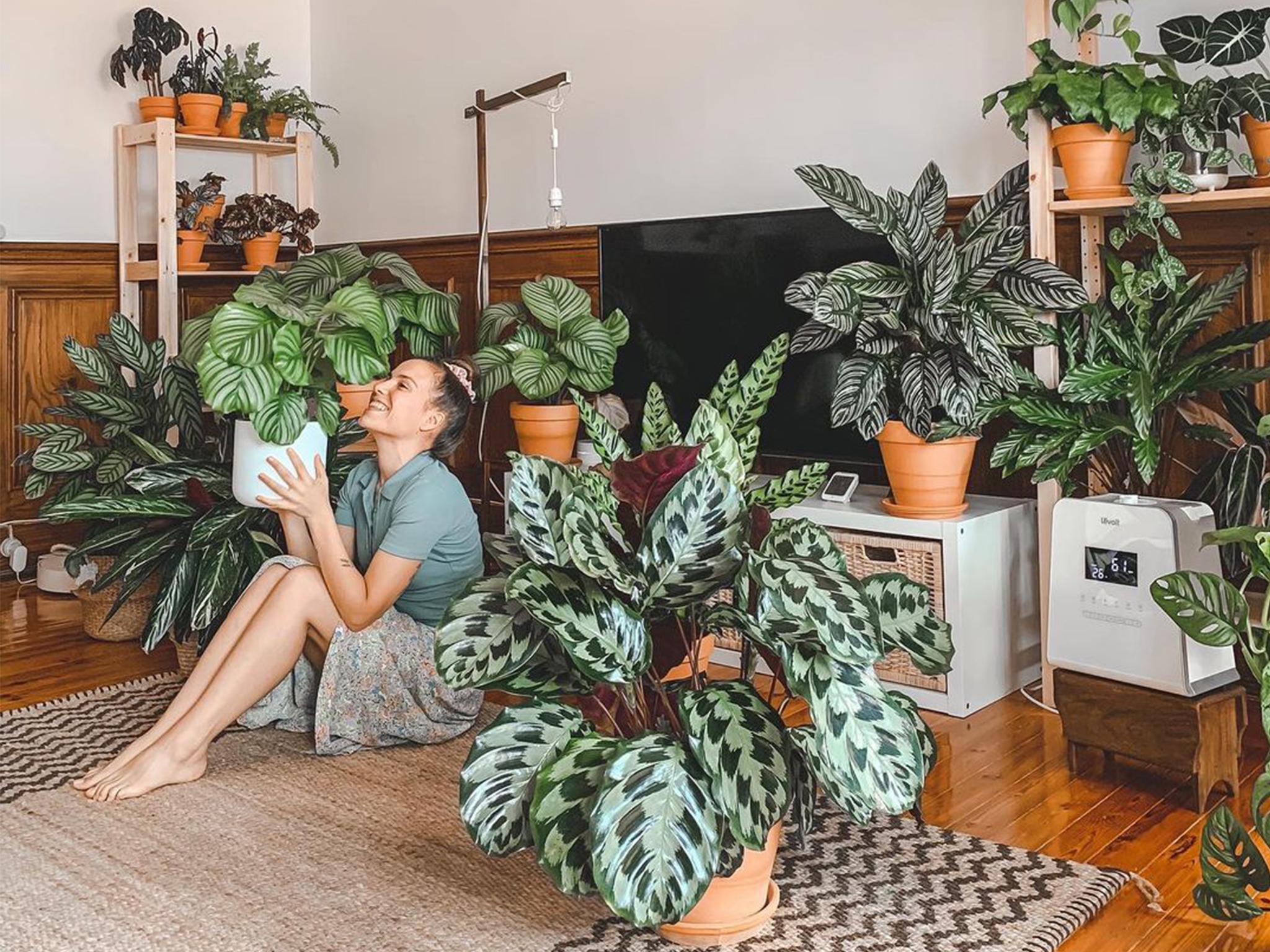 Plantas, @atripeirinha, Sofia Manuel