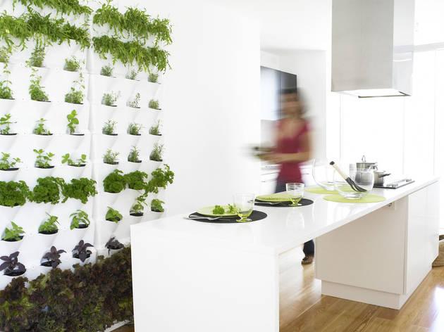 Compras, Plantas, Minigarden