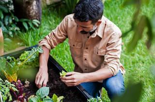 Compras, Plantes, Noocity