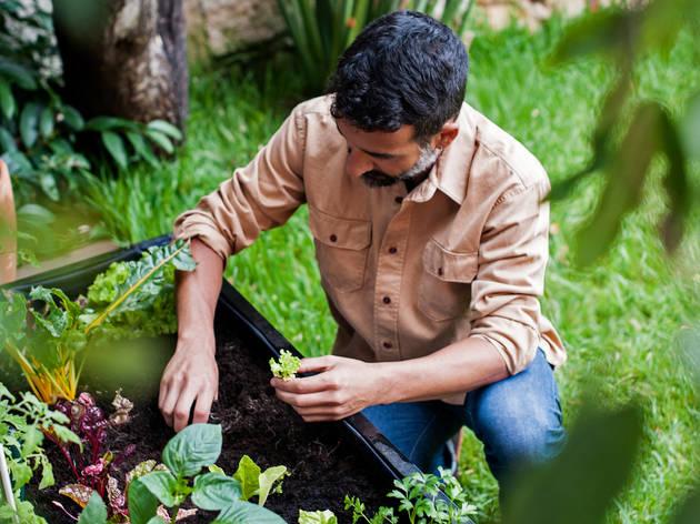 Seis projectos que o ajudam a ter uma horta dentro de portas