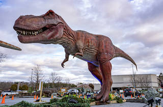 Dino Safari at Fox Valley Mall in Aurora
