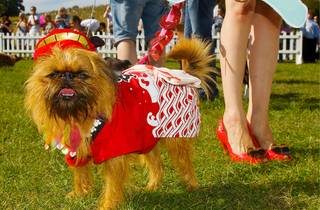 Small dog in bright red coat with owner's legs in the background