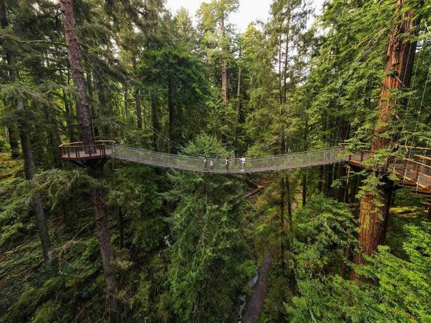 Redwood Skywalk