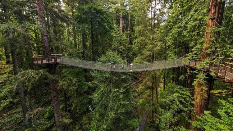 Redwood Skywalk