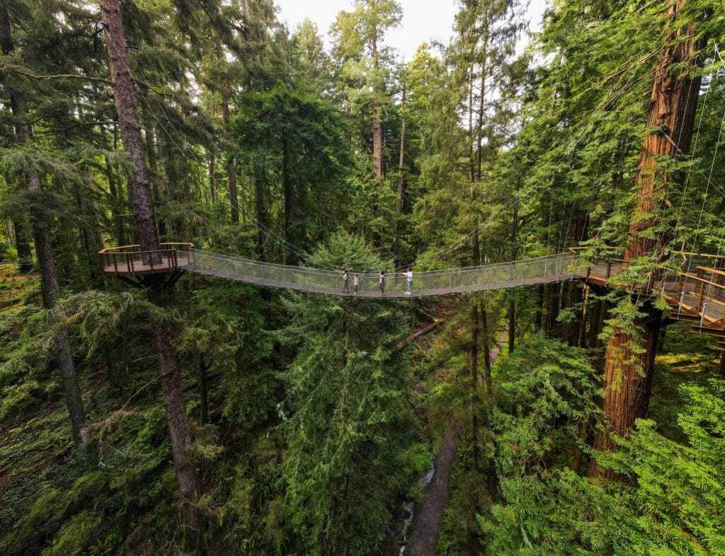 Northern California is getting a stunning new sky walk through the redwoods