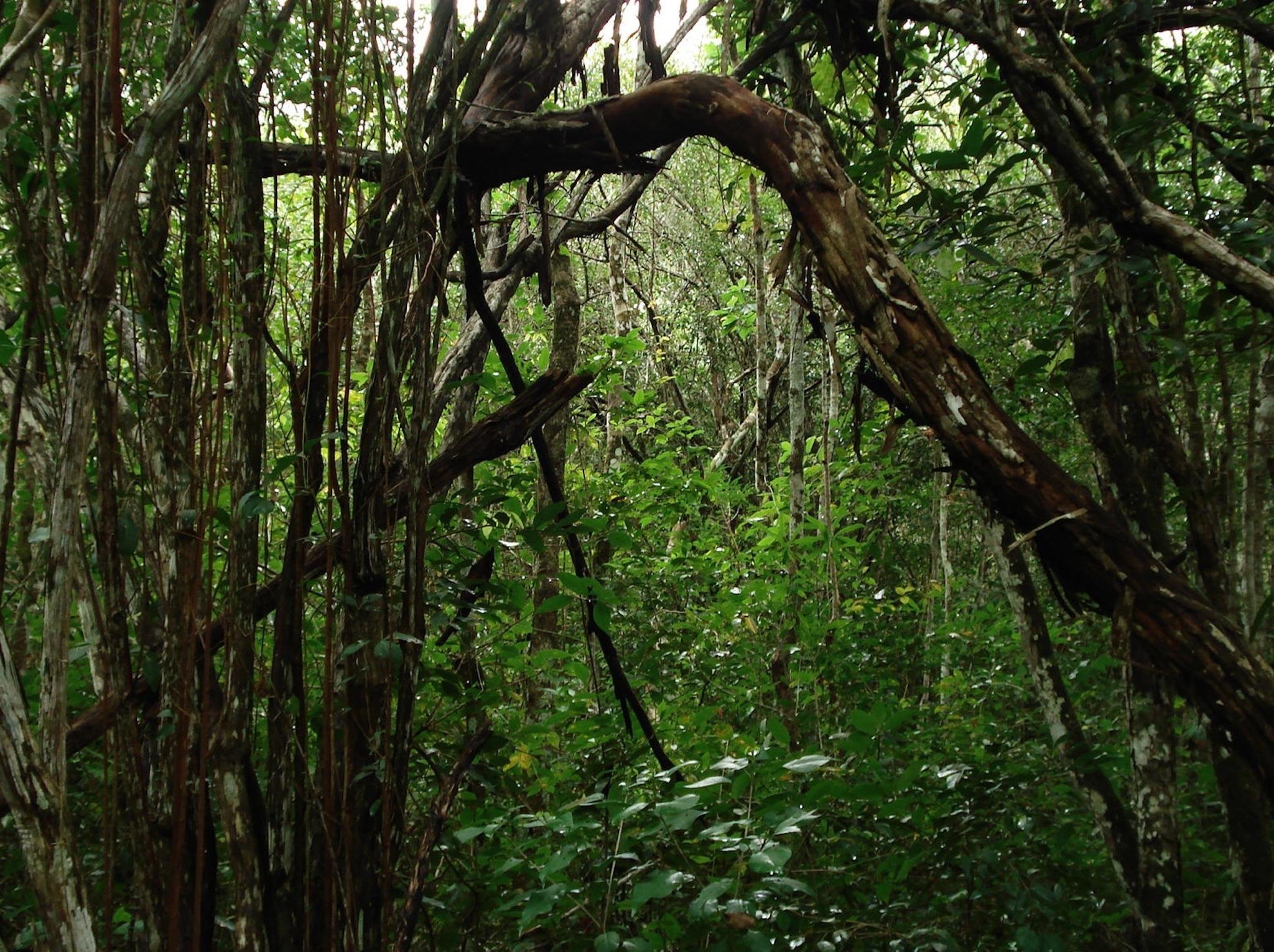 Hyper-Rainforest