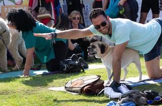 Pound Paws Dog Pilates