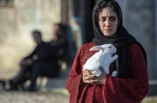 TiTi, Iranian Film Festival 2021