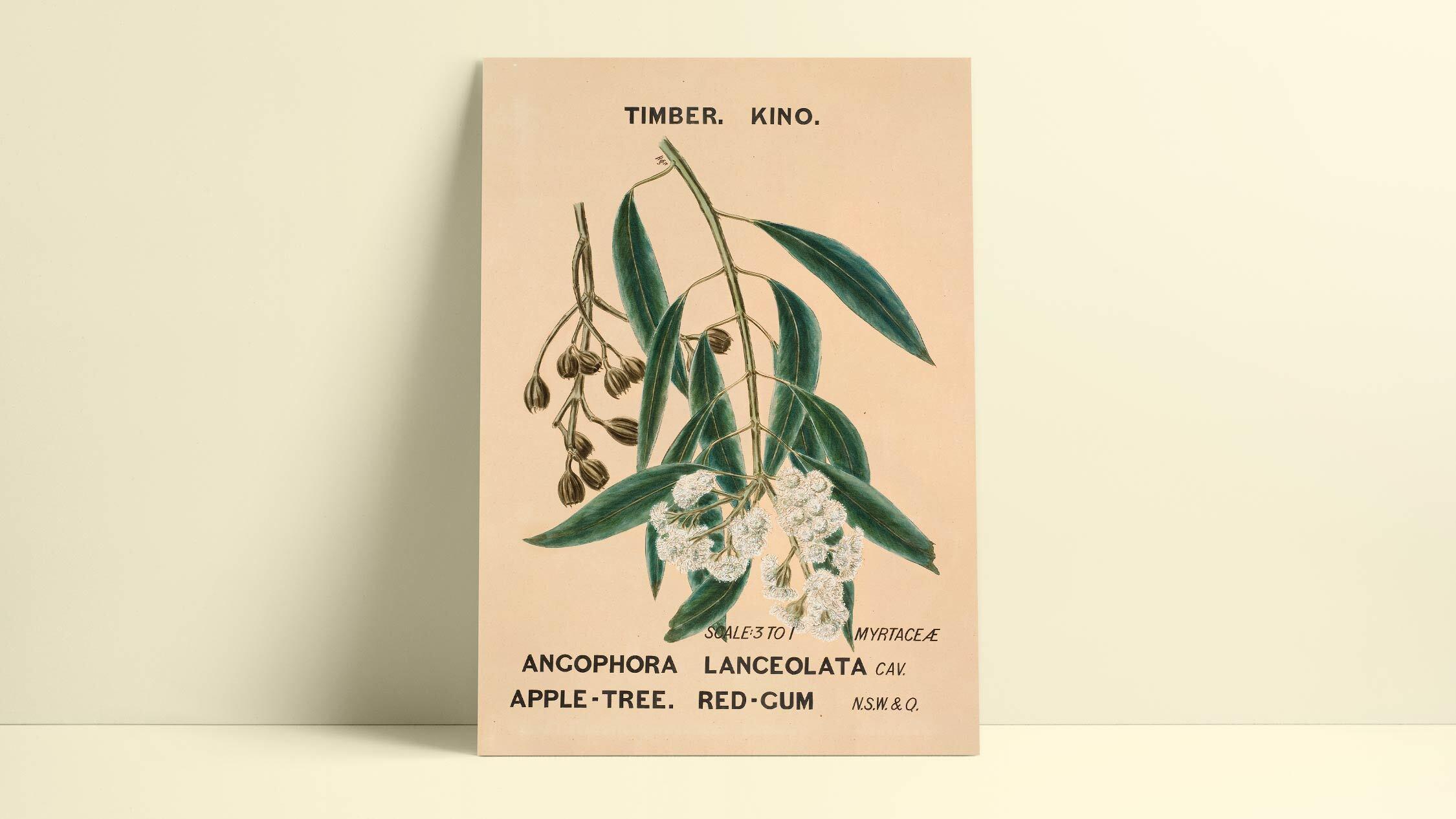 Eucalyptusdom