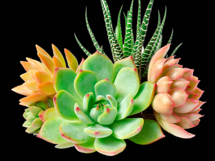 Succulents & Sips at Time Out Market